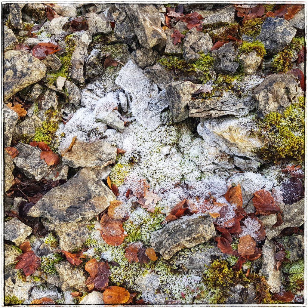 Photographie d'éléments naturels en hiver (feuilles, pierres, givre).